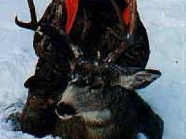 Cynthie Fisher - Spotted Dog Web, LLC (dba. SpottedDogWeb.com) Wildlife Art Artist Websites